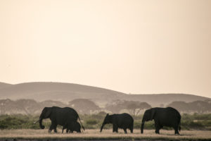 Kenya - Amboseli - Big 5 - Elephant group with baby