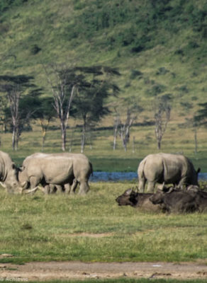 Kenya - Lake Nakuru - Big 5 - White rhino group