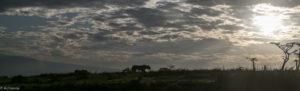 Tanzania - Ngorongoro - Big 5 - Lioness sunrise