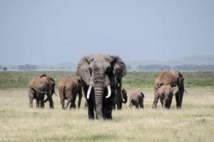Amboseli, Kenya - Elephant family