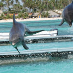 Punta Cana, Dominican Republic - Swimming with dolphins