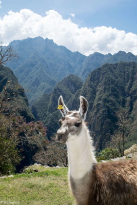 Inca Trail, Peru - Machu Picchu Landmark - 3 day Trekking