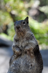 California, USA - Yosemite National Park - Vernal Fall Trail