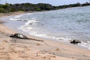 Big Island, Hawaii - Kaloko-Honokohau National Historical Park - Sea Turtle