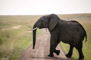 Masai Mara, Kenya - Safari - Game drive - Elephant spotting
