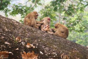 Chiang Rai, Thailand - Monkey Temple (Wat Tham Phra) - Macaques