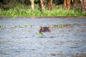 Lake Naivasha, Kenya - Crescent Island Game Sanctuary - Boat tour & Walk