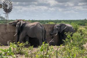 Kruger National Park, South Africa - Self drive from Phalaborwa to Satara