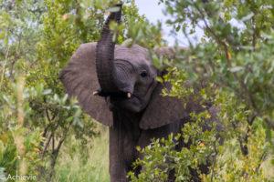 Kruger National Park, South Africa - Wolhuter Wilderness Trail
