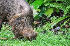 Borneo, Malaysia - Sarawak - Bako National Park - Hiking & Wildlife