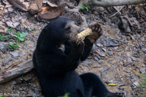 Borneo, Malaysia - The Bornean Sun Bear Conservation Centre