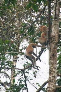 Borneo, Malaysia - Bilit village - Kinabatangan river - River cruise