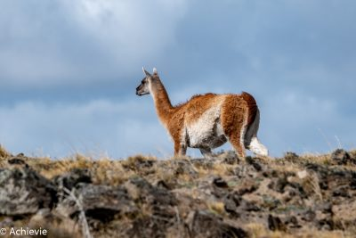 Pali Aike National Park, Chile - Patagonia - Travelling Accountant