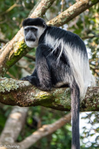 Bwindi National Park, Uganda - Travelling Accountant