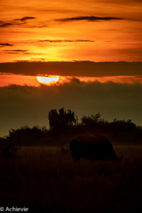 Queen Elisabeth National Park, Uganda - Travelling Accountant