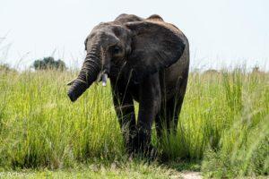 Murchison Falls National Park, Uganda - Travelling Accountant