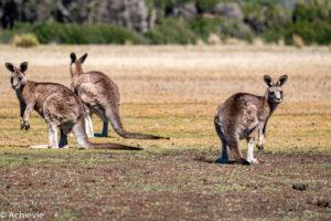 Tasmania, Australia - Travelling Accountant